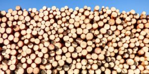 Kiln Dried Firewood (A Complete Guide)